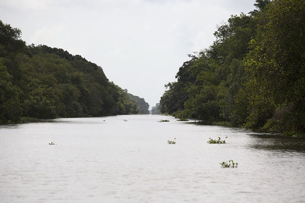 The canal cutting through Azagny National Park | Azagny National Park | Ivory Coast