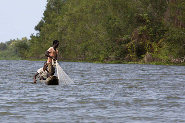 Foto de Fisherman throwing his net from a pirogue into the Bandama river - Costa Marfil - Africa