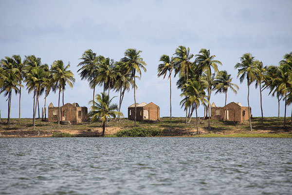 Line of palm trees with ruins of former holiday homes | Parc national d'Azagny | Côte d'Ivoire