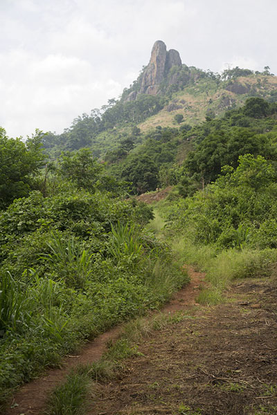 Trail with Dent de Man in the background | Dent de Man | Ivory Coast