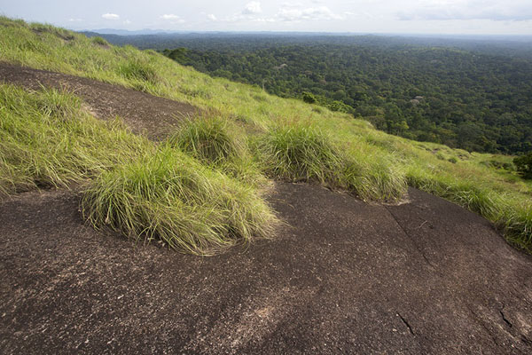 View from the top of Mont Nienokoué | Djiroutou Taï National Park | Ivoorkust