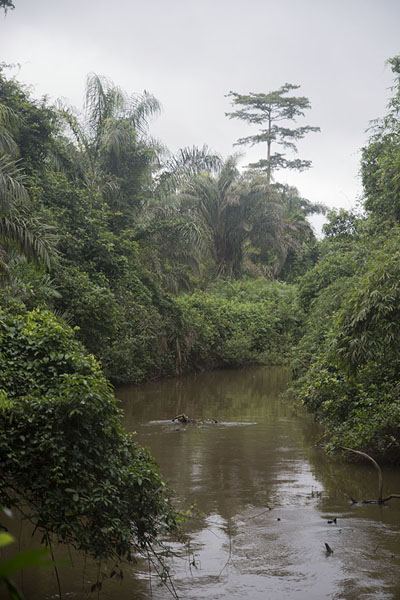The river marking the border of Taï National Park | Djiroutou Taï National Park | Côte d'Ivoire