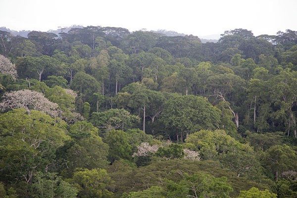 Foto van View from Mount Nienokoué with the primary rainforest below - Ivoorkust - Afrika