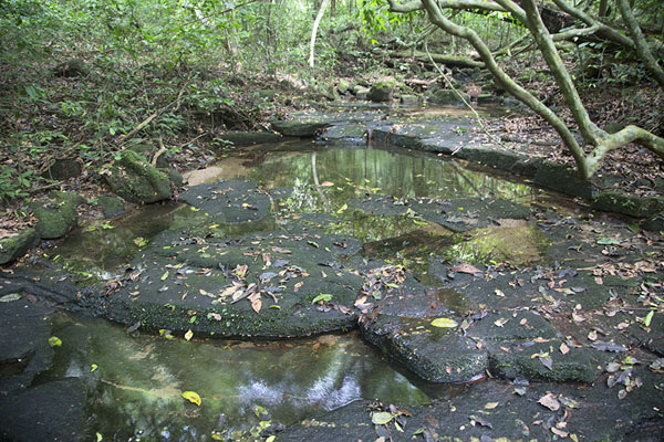 Stream in the forest | Djiroutou Taï National Park | Costa Marfil