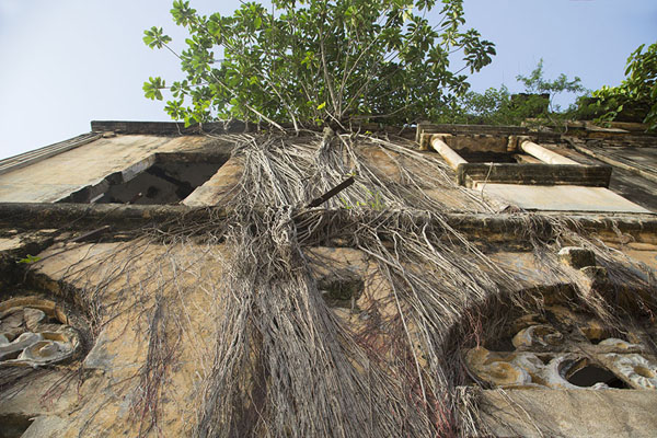Foto de Maison Ganamet with trees growing on its walls - Costa Marfil - Africa