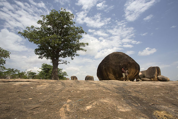 Boulders and tree at the sacrificial site of Mont Sienlow | Korhogo | Ivoorkust