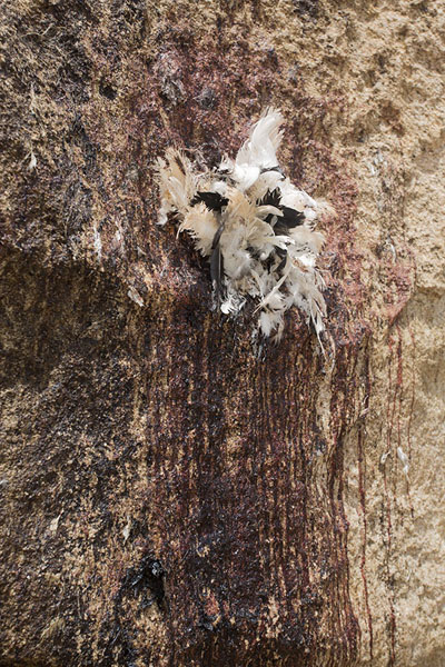 Chicken feathers and stains of blood on the sacrificial boulder at Mont Sienlow | Korhogo | Costa d'Avorio