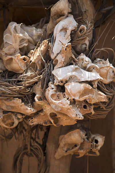 Collection of skulls of sacrificed animals next to the door of a sacrificial hut | Niofoin | Côte d'Ivoire