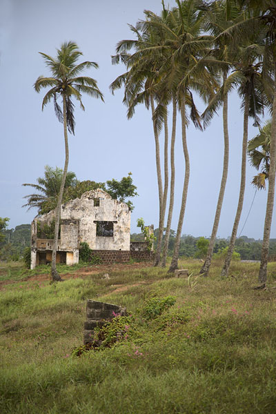 One of the colonial ruins with a line of tall palm trees in front | Sassandra | Ivoorkust