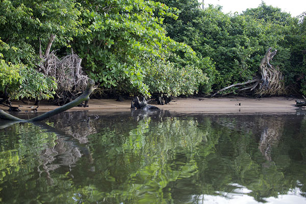 The lush vegetation of Fisolagpo islet reflected in the perfectly still Sassandra river | Sassandra | Ivoorkust