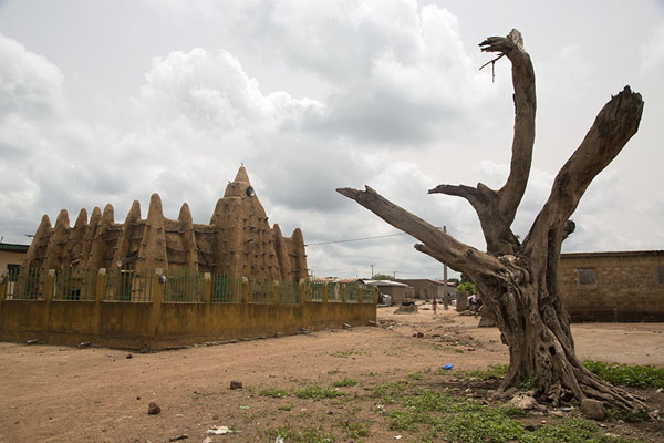 Dead tree with the mosque of Sorobango in the background | Sorobango moskee | Ivoorkust
