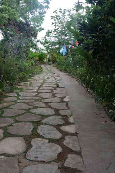 Foto van The road leading up to Mount ZionNine Mile - Jamaica