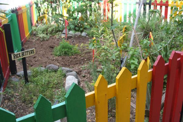 Small medicinal herb garden where Bob Marley grew his own crop | Bob Marley Museum | Jamaica