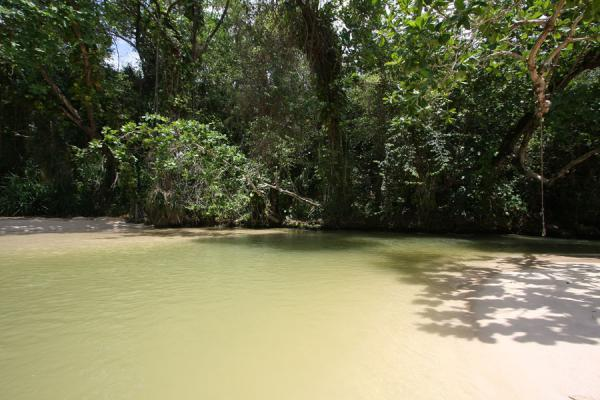 Foto van Quiet corner of the river near Frenchman's Cove BeachPort Antonio - Jamaica