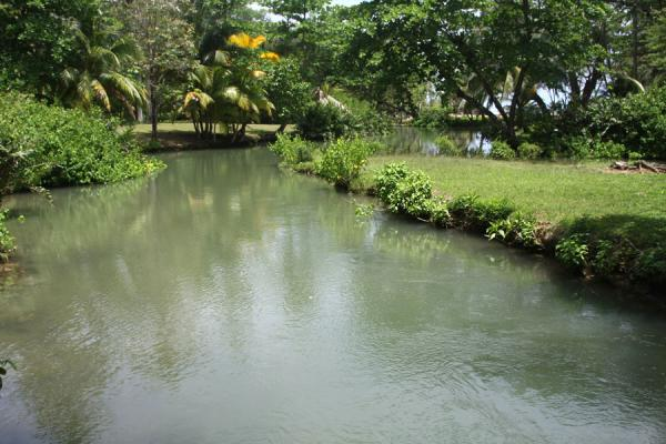 Photo de River leading to Frenchman's Cove BeachPort Antonio - Jamaique
