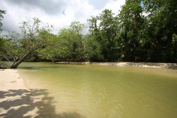 Photo de River near Frenchman's Cove Beach just before reaching the sea - Jamaique - Amérique