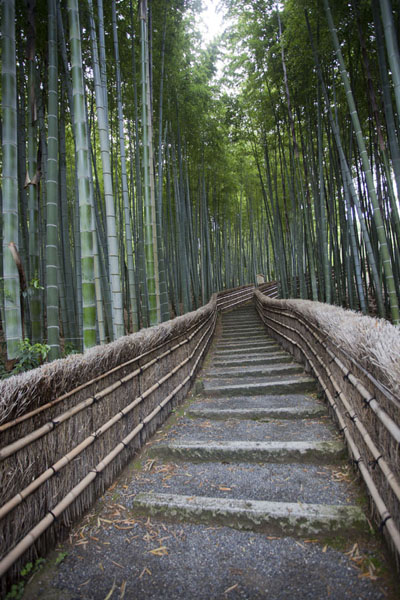 Stairs leading to a bamboo grove at the Adashino Nembutsu-ji cemetery | Arashiyama | Japón