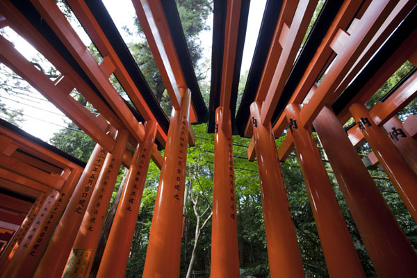 Foto de Looking up a row of torii gatesKioto - Japón