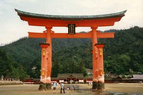 Picture of Walking around the torii of Itsukushima Shrine at low tide