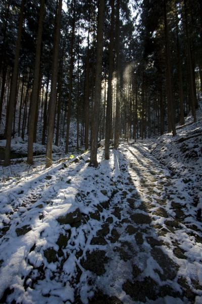 Picture of Sunlight and snow falling through the trees