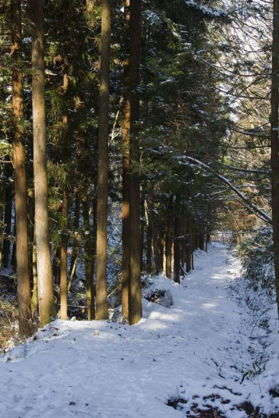 Snowy Nakasendo leading through the woods | Nakasendo | Japn