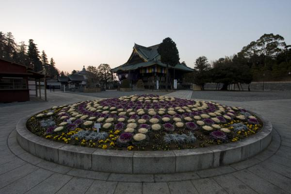 Flowerbed with Shakado Hall in the background at dusk | Narita-san Shinsho-ji temple | Japan