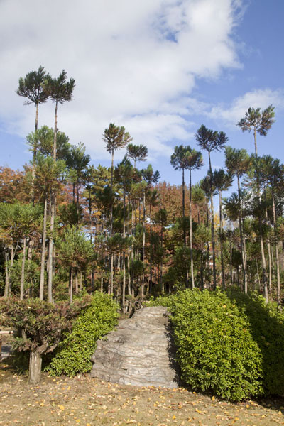 Photo de Tall trees and rock formation at the Green Garden of Nijo Castle complexKyoto - Japon