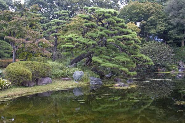 Picture of Imperial Gardens (Japan): Trees and pond in the Ninomaru Garden