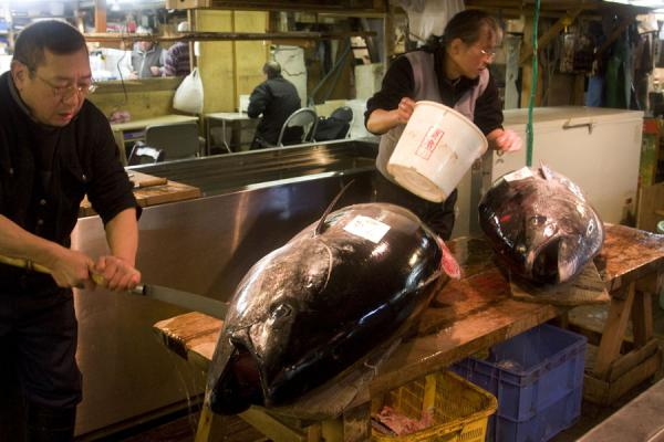 的照片 日本 (Washing and cutting tuna at Tsukiji market)