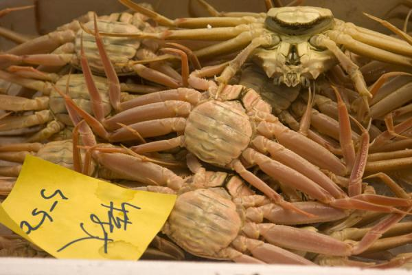 Box with crabs at Tsukiji market | Tsukiji Central Fish Market | Japan
