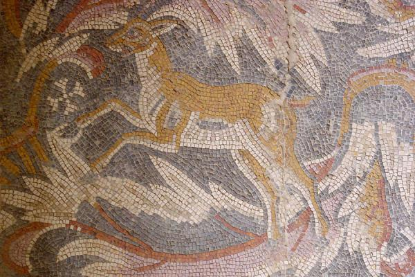 Picture of Madaba Archaeological Park (Jordan): Mosaic animal, Madaba