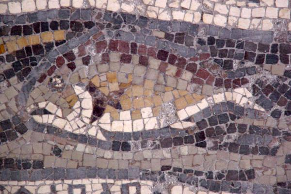Fish in a river | Madaba Mosaic churches | Jordan