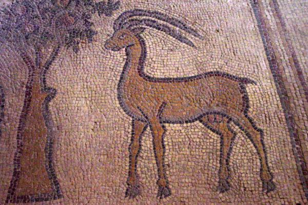 Fragment of one of the mosaics in the Apostles Church | Madaba Mosaic churches | Jordan