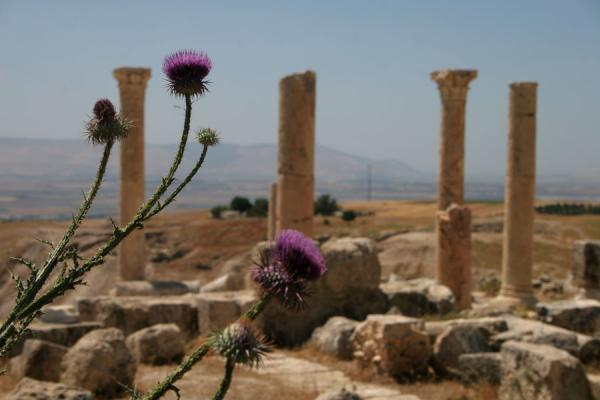 Foto de Pella: remains of East Church and view into the West Bank - Jordania - Asia