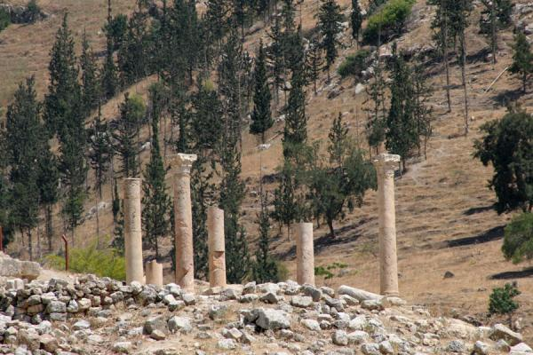 Pillars of the East Church merging with the landscape around Pella | Pella | Jordania