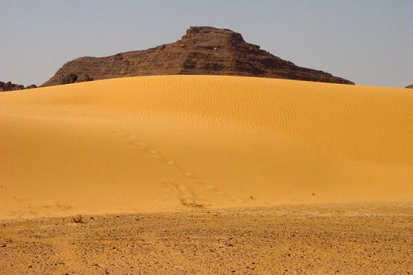 Photo de Sanddune in Wadi RumWadi Rum - Jordanie