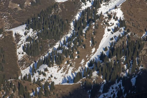 Trees and snow on the slopes of a mountain in Kim-Asar valley | Kim-Asar hiking | Kazakhstan