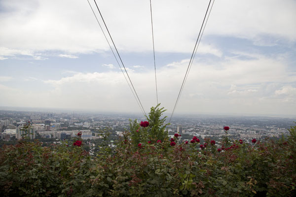 Picture of Flowers flourish on top of Kök TöbeAlmaty - Kazakhstan