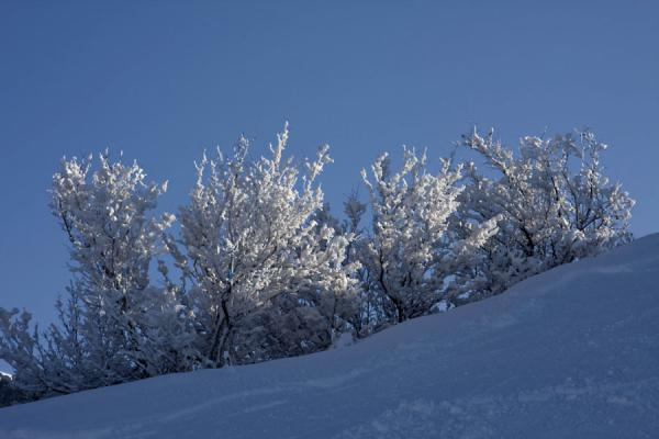 Picture of Tabagan Skiing (Kazakhstan): Trees and snow on top of a hill at Tabagan