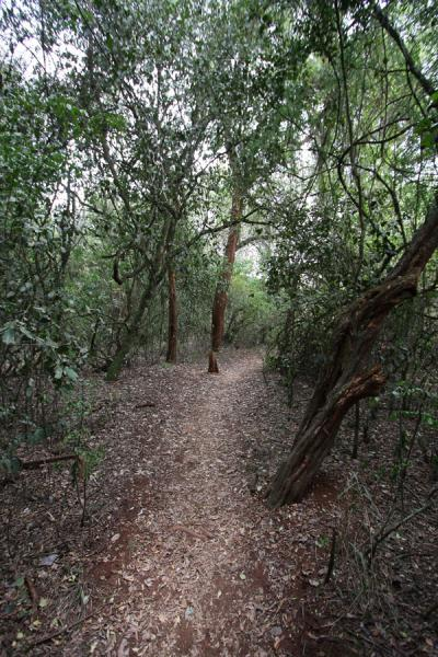 Path behind the house of Karen Blixen | Karen Blixen huis | Kenia