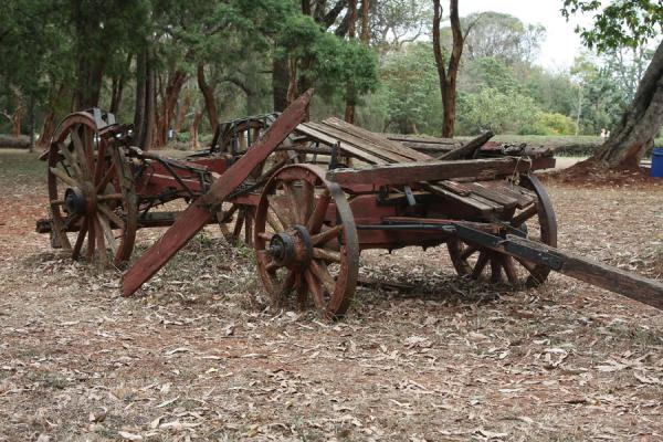 Foto di Old carriage used by Karen Blixen - Kenya - Africa