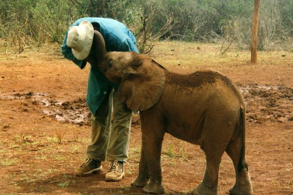 Foto van Trying to get the elephant to drink.Olifanten - Kenia
