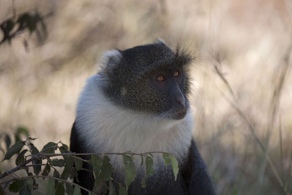 Picture of Nairobi National Park (Kenya): Baboon in the National Park