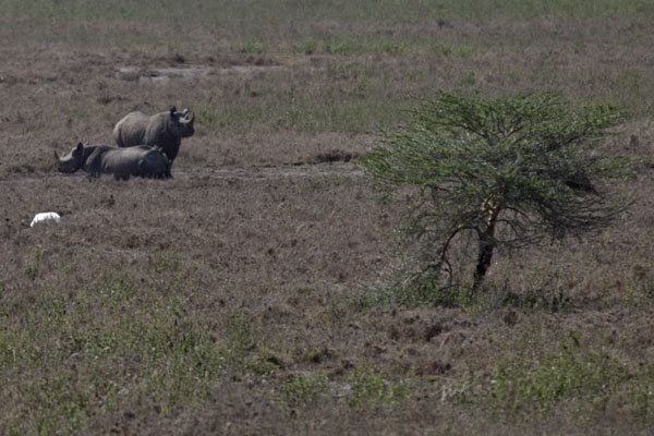 Foto van Pair of black rhinoceros in the National ParkNairobi - Kenia