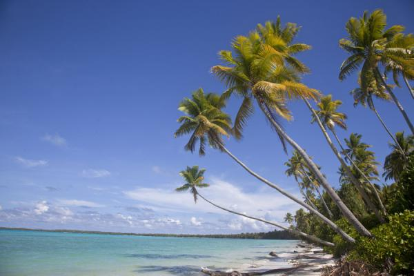 Foto di Palm trees over the white beach and turquoise waters of the lagoon of Abaiang in the southern part of the isletAbaiang - Kiribati