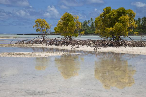 Mangrove trees reflected in the shallow water of a channel between two islets | Tarawa Norte | Kiribati