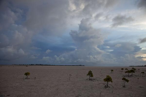 Foto van Large swathe of land exposed by the low tideNoord Tarawa - Kiribati