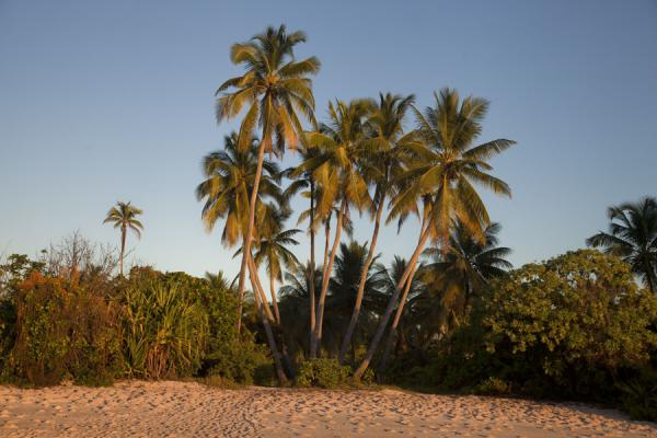 Foto van Small beach with palm trees just before sunset - Kiribati - Oceanië