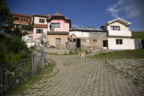 Dog in front of several houses in Brod | Brod | Kosovo
