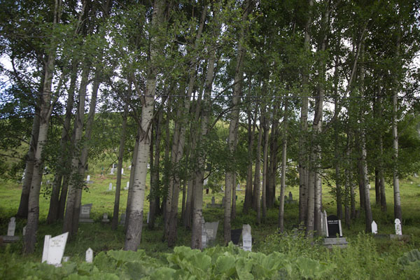 The cemetery of Brod is lined by trees | Brod | Kosovo
